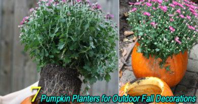 7 Pumpkin Planter Ideas for Outdoor Fall Decorations