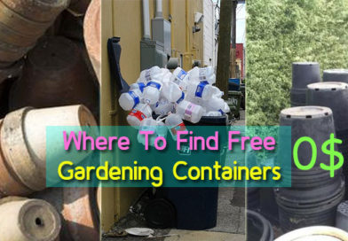 Where to Find Free Containers for Your Garden