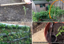 Vegetable Garden Tricks for The Beginner – Video Tutorial