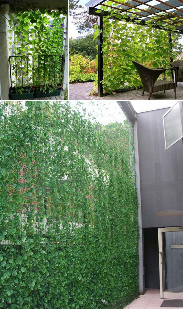 Try These 10 Ideas for Adding Privacy to Backyard Oasis ...