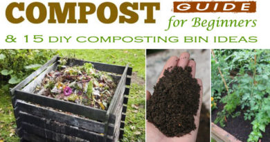 Compost Guide and Tips for Beginners & 15 DIY Composting Bin Ideas