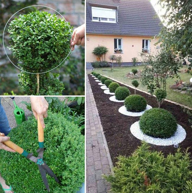 spherical plant sculpture