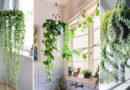 Lighten Up Your Room with 7 Attractive Hanging Plants