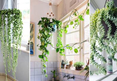 Lighten Up Your Room with 7 Attractive Hanging Plants