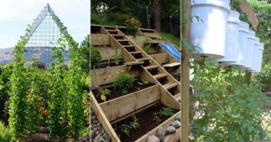 10 Unexpected Places to Grow Your Vegetable Garden