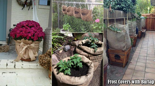 10 Clever Uses for Burlap in Gardening Projects