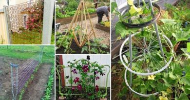 12 DIY Recycled Garden Trellis Ideas