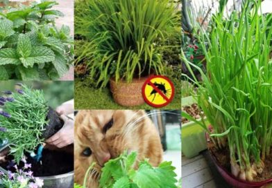 10 of The Best Plants That Repel Mosquitoes