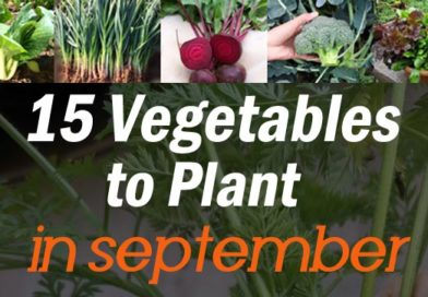 Fall Garden: 15 Quick Growing Vegetables to Plant in September
