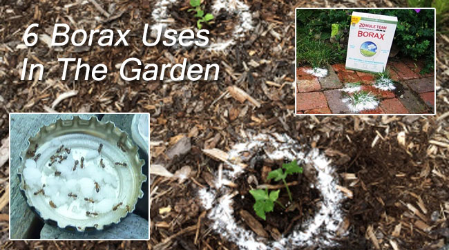 borax uses in the garden