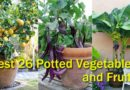 Best 26 Potted Vegetables and Fruits for Container Gardens