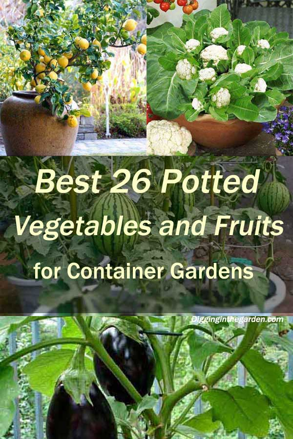 potted vegetables and fruits