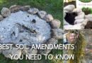 7 Best Soil Amendments You Need To Know
