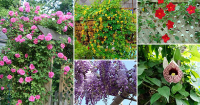 Top 12 Attractive Vines That Can Be Grown In Containers