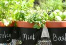 The Dos & Don't of Planting Herbs In Pots