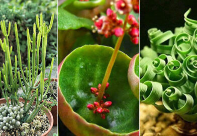 5 Unusual, Unfamiliar, and Beneficial Houseplants