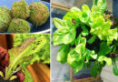 How to Make a Beautiful and Nutritious Lettuce Globe