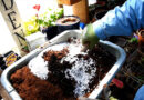How to Make an Easy, Affordable, and All-Purpose DIY Potting Soil