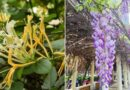12 Best Fragrant Plants For Your Yard