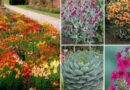 14 Best Drought-tolerant Plants For Low Water Gardens