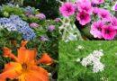 Best 15 Plants That Flower All Summer Long