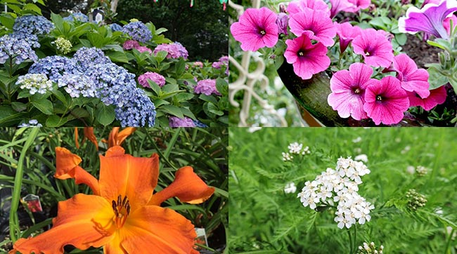 Best 15 Plants That Flower All Summer Long