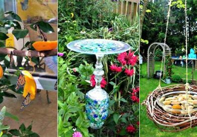 15 DIY Butterfly Feeders That Will Make Your Garden A Butterfly Paradise