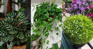 Best 18 Bathroom Plants That Absorb Moisture And Purify The Air